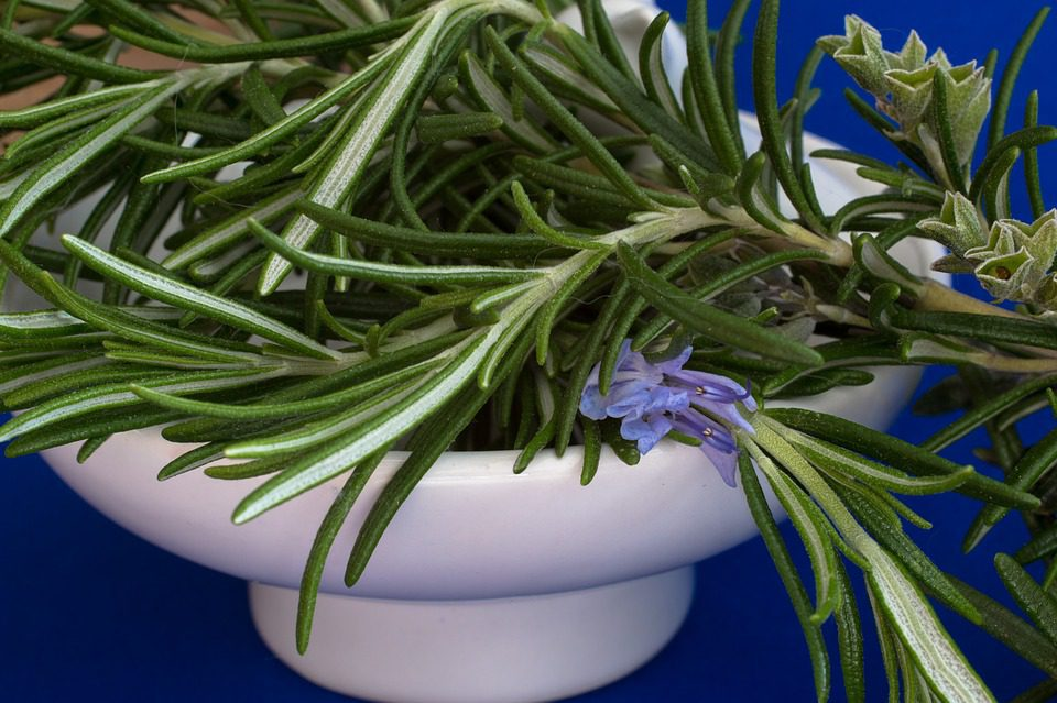 Rosemary Can Help Improve Memory: Narcissistic Abuse Recovery